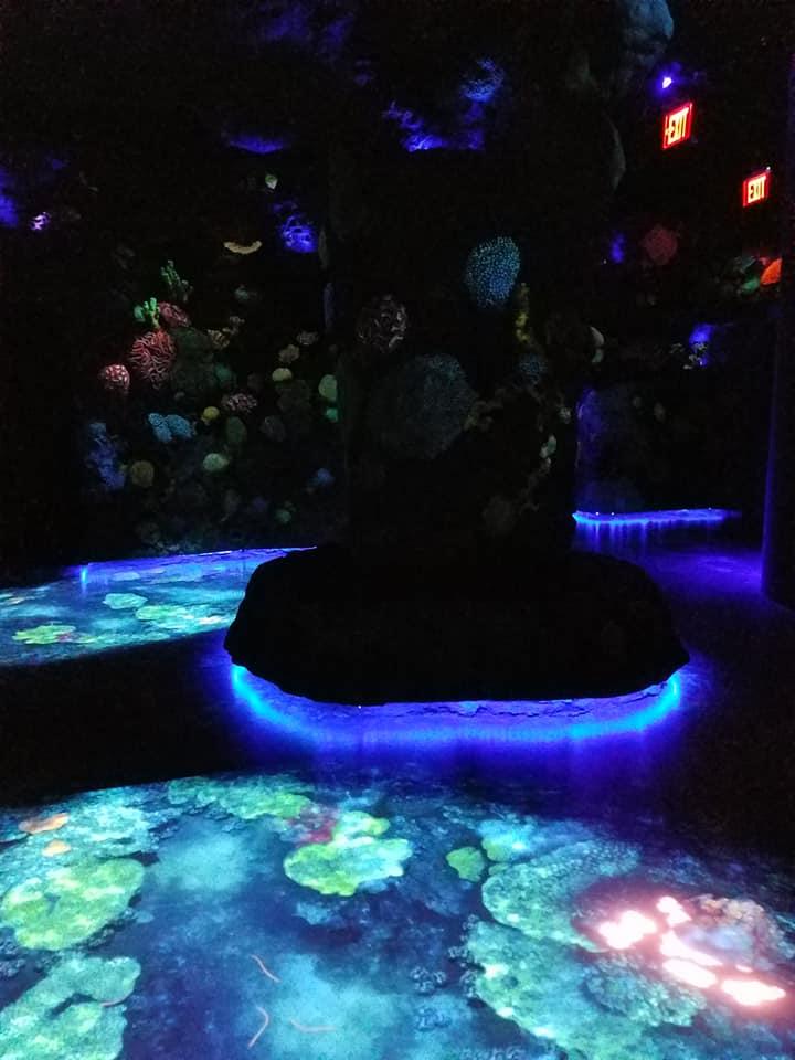 Ocean Odessey bioluminesence